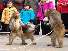 耍猴艺人卖艺获刑 两千年来入刑第一例